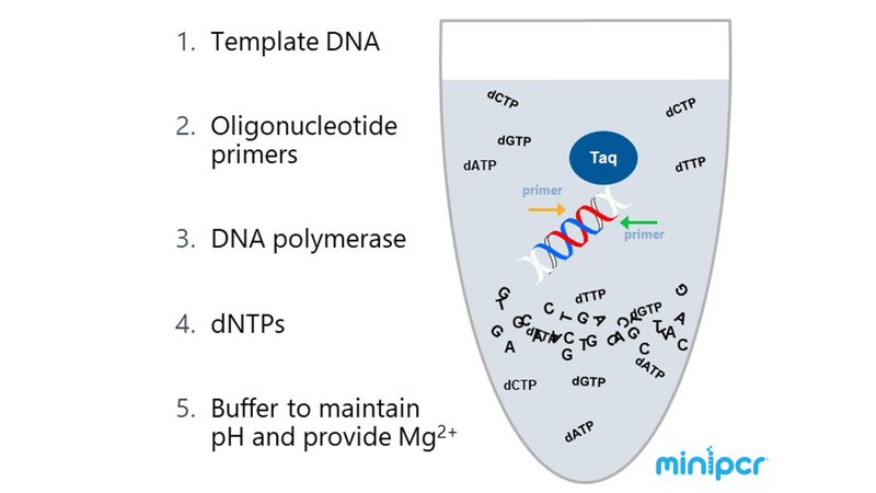 Using PCR in your Genes in Space proposal - Genes in Space
